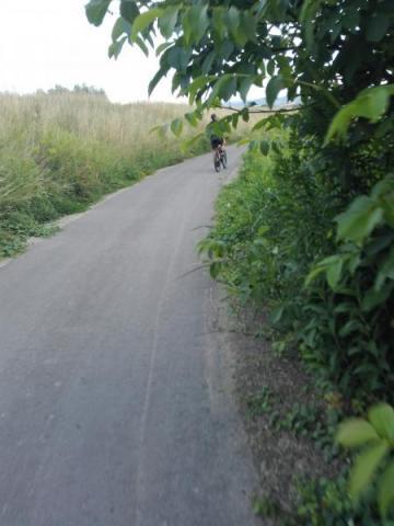Zarośnięta ścieżka rowerowa na trasie Nowy Sącz-Stary Sącz