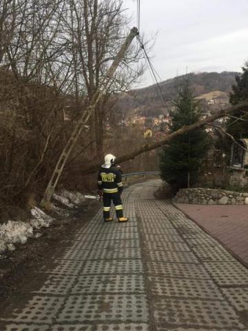Wiatr łamał drzewa a strażacy walczyli