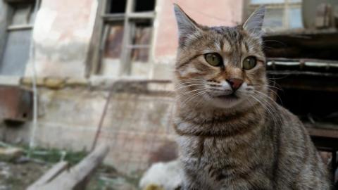 Gródek nad Dunajcem: gmina zaopiekuje się bezdomnymi zwierzętami. Trwa sesja