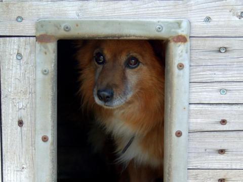Odławianie, sterylizacja i pomoc potrąconym zwierzętom. To wszystko robi gmina