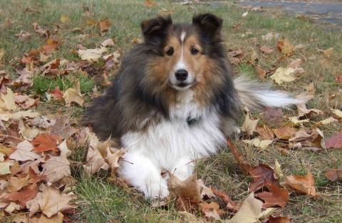 Stary Sącz: gmina zapłaci za czipowanie i sterylizację psów