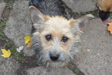 Psy do adopcji z gminy Łabowa