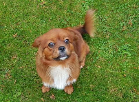 Marcinkowice: Kto wyrzucił tego psa z samochodu?