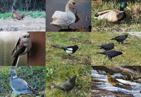 Te ptaki możesz spotkać w sądeckich lasach. Czy znasz je? [QUIZ]