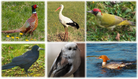 Te ptaki spotkasz w Nowym Sączu. Czy znasz je? Sprawdź swoją wiedzę w QUIZIETe ptaki spotkasz w Nowym Sączu. Czy znasz je? Sprawdź swoją wiedzę w QUIZIE