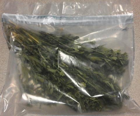 Schowali marihuanę w majtkach. Teraz będą siedzieć