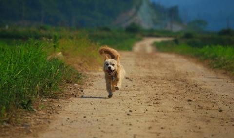 Zapnijcie biegające luzem psy na smycze! Gmina apeluje do mieszkańców