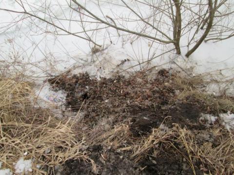 Dzikie wysypisko śmieci sprzątnięte