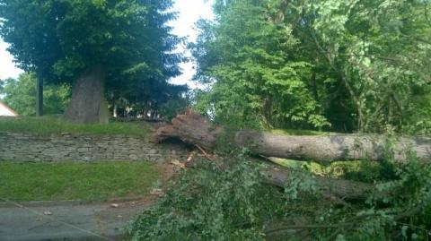 Dobra: Drzewo przygniotło mężczyznę