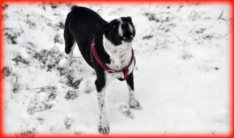 Nowy Sącz: niech pies atakuje, bo schronisko i tak przepełnione?