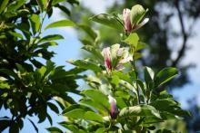 Ptasie sejmiki, żółte liście i magnolie. Lato, a za rogiem już jesień