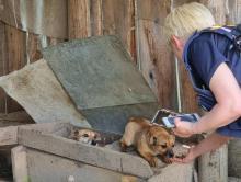 Trzymał psy w fatalnych warunkach. Mieszkańcy twierdzą, że hodował je na smalec