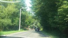 Rozrośnięte gałęzie - ulica Biegonicka w Nowym Sączu