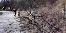 Drzewa łamały się jak zapałki. Strażacy usuwają skutki wichury [ZDJĘCIA]