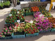 Nowy Sącz: Rynek Maślany kusi kupujących owocami, warzywami i pięknymi roślinami