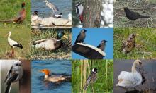 Te ptaki spotkasz na Sądecczyźnie. Czy znasz je? Sprawdź swoją wiedzę w quizie