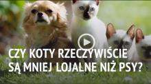 Czy koty są mniej lojalne niż psy