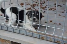 Podegrodzie: szukają rodzin zastępczych dla bezdomnych psów. Dołączysz?