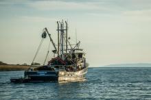 Poszło o rybaków. Spór Francji z Wielką Brytanią i okręty na kanale La Manche