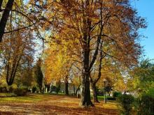 Pierwszy dzień jesieni 2020. Kiedy zaczyna się jesień?
