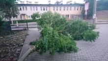 Gwałtowne burze przeszły nad Sądecczyzną. Największe szkody wyrządziły w Krynicy i Piwnicznej [ZDJĘCIA]