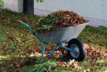 Stary Sącz: zielone śmieci? Sprawdź harmonogram dodatkowej zbiórki