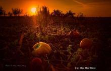 Fot. Max Meir Mroz