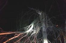 Koszmarna noc. Drzewa waliły się na drogi, wiatr demolował dachy domów