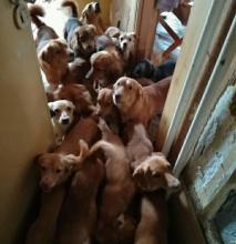 Pod nieobecność właścicielki trwa akcja wynoszenia psów z mieszkania przy ul. Zamenhofa
