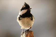 Leśne ptactwo Sądecczyzny. Ile ich sami rozpoznaliście na zdjęciach?