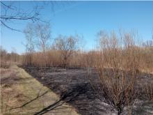 Nowy Sącz: płoną trawy nad Kamienicą. Strażacy mieli kilka wyjazdów [ZDJĘCIA]