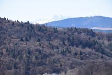 Z wieży widokowej w Muszynie w pogodne dni zobaczysz Tatry. Warto przyjechać!
