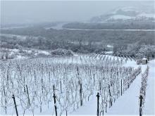 Na mroźny spacer do Zbyszyc i uroczej winnicy w Gródku na wzgórzu