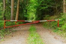 Przyjechał do Bukowca na grzyby. W lesie znaleziono jego ciało