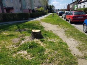 Ścięli 14 drzew przy Korzeniowskiego w Nowym Sączu. Po co?