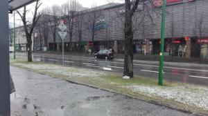 """""""Święta krowa"""" na ulicy Lwowskiej"""