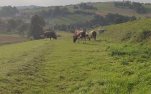 Droga widmo. Powinny poruszać się tędy samochody, a nie konie i krowy