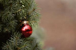 Co zrobić z choinką po świętach? Jak podarować jej drugie życie?