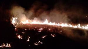 Paliły się trawy w Suchej Strudze